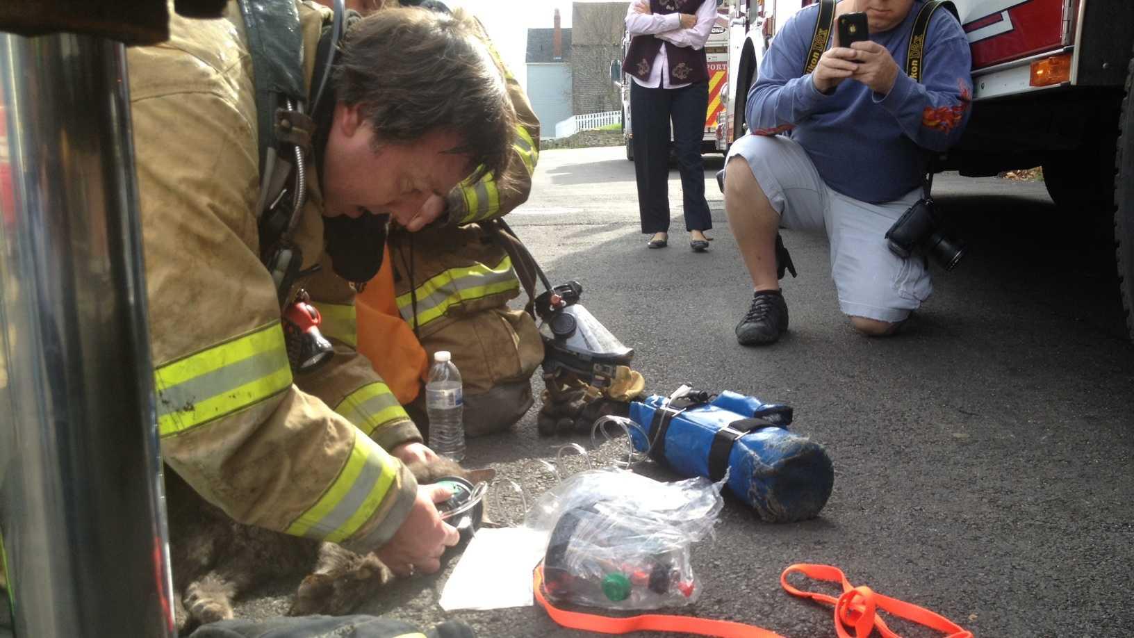 Rescued Portsmouth cat Tiki Bear