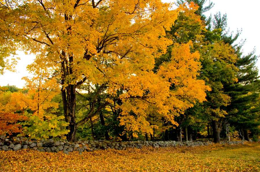 Question 7: Does the weather affect foliage?A)Yes, it does&#x3B;B) No, it doesn't.