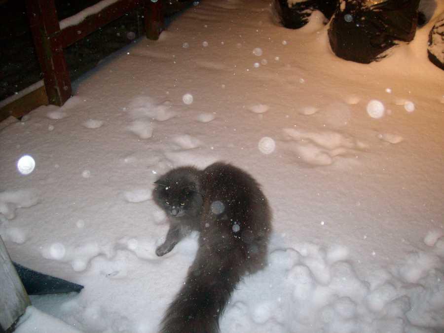 Snow in Rindge