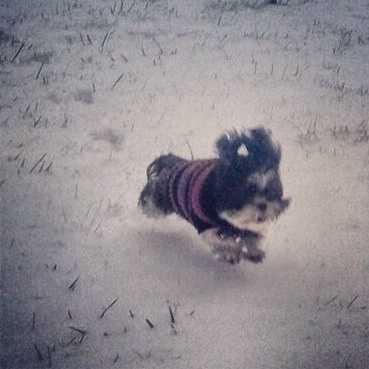 Bella the dog...