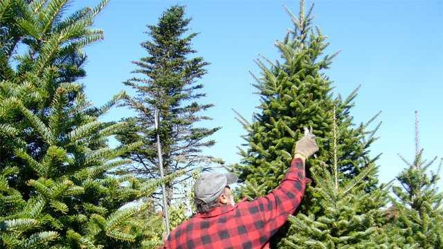 Christmas_tree_generic.jpg