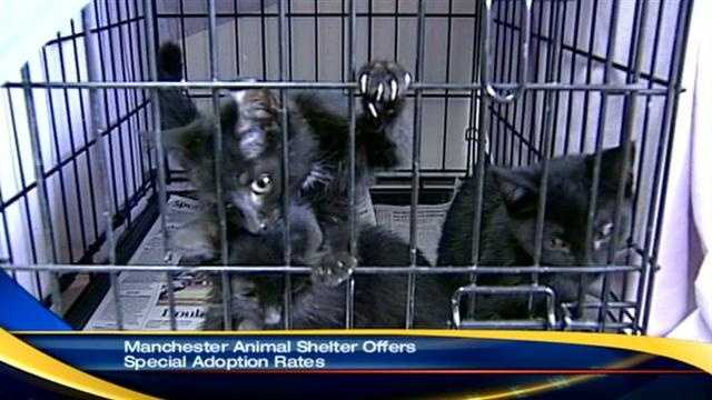 Manchester Animal Shelter cats