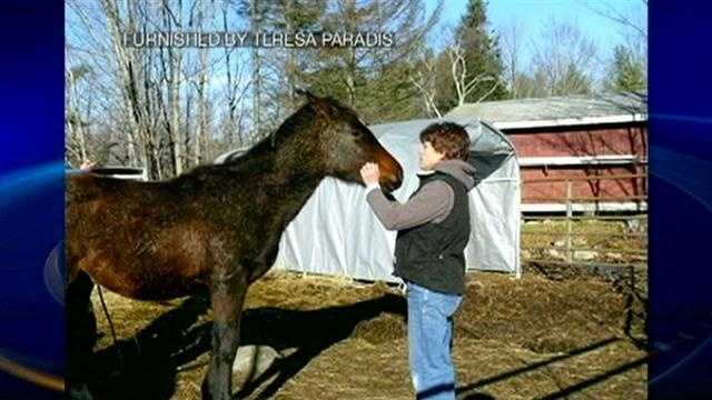 Horses seized from Littleton property