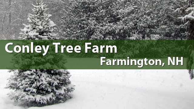 Conley Tree Farm, Farmington