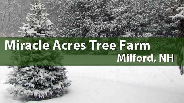 Miracle Acres Tree Farm, Milford