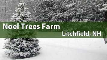 Noel Trees, Litchfield