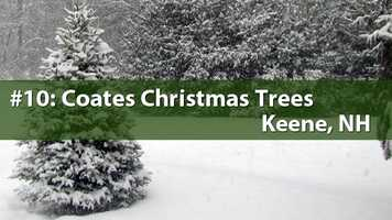 No. 10) Coates Christmas Tree, Keene