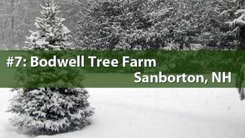 No. 7) Bodwell Tree Farm, Sanborton