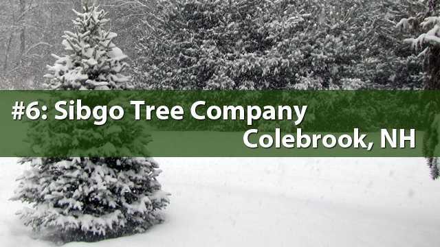 No. 6) Sibgo Tree Company, Colebrook