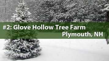 No. 2) Glove Hollow Tree Farm, Plymouth