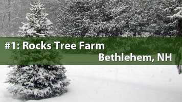 No. 1) Rocks Tree Farm, Bethlehem