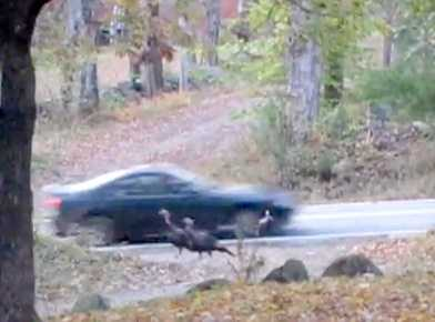 No. 6: A man captured a car intentionally hitting a group of turkeys on camera outside his home. Check out the video here.