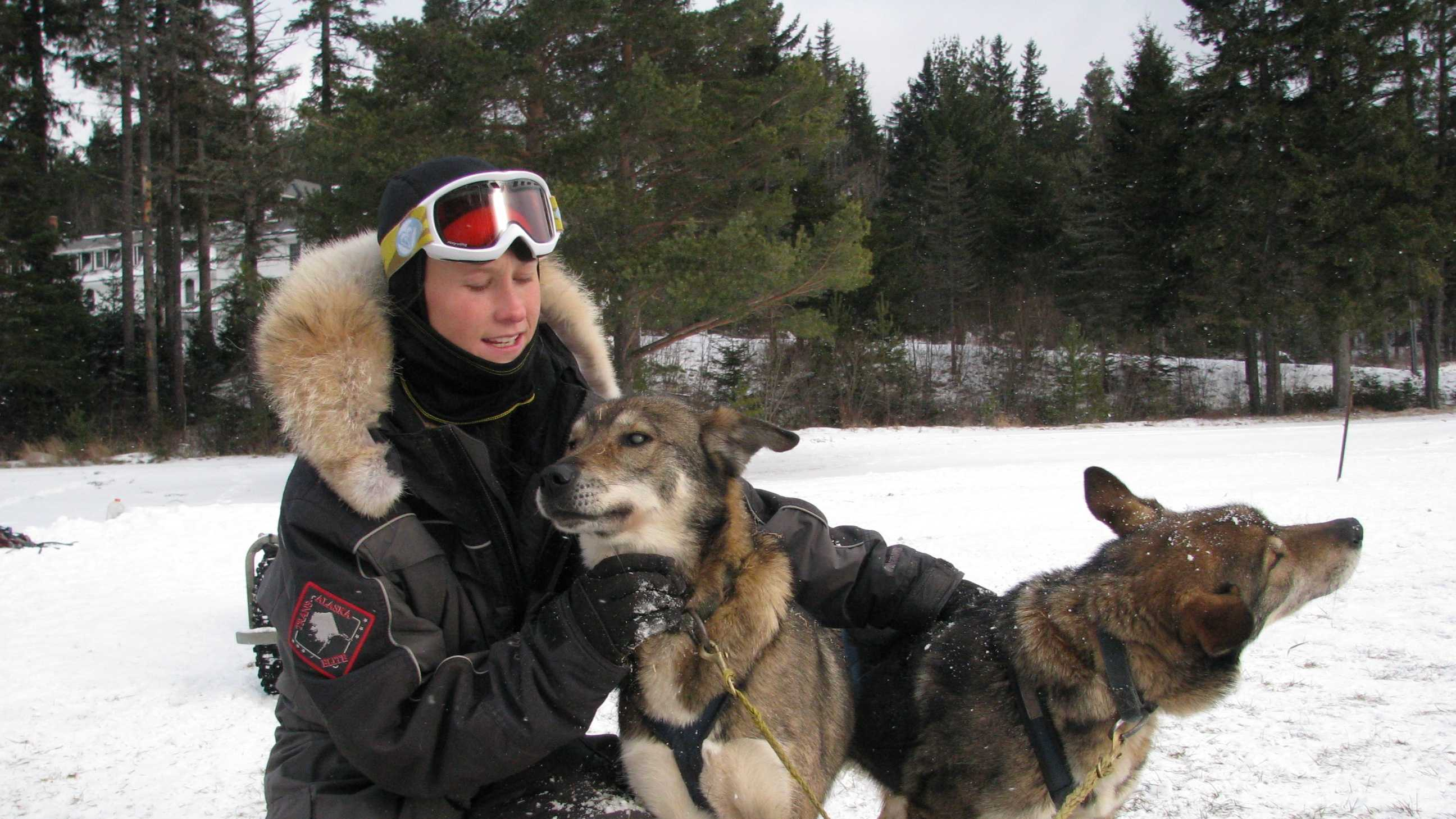 AJ Norton, a musher at Muddy Paw sled dog kennel in Jefferson, gives some love to Gonzo, who is blind. Poncho, his brother at right, provides him confidence to continue to do what he loves most: run. They are 7-year-old Alaskan Huskies who were hard at work recently at the Omni Mount Washington Hotel in Bretton Woods.