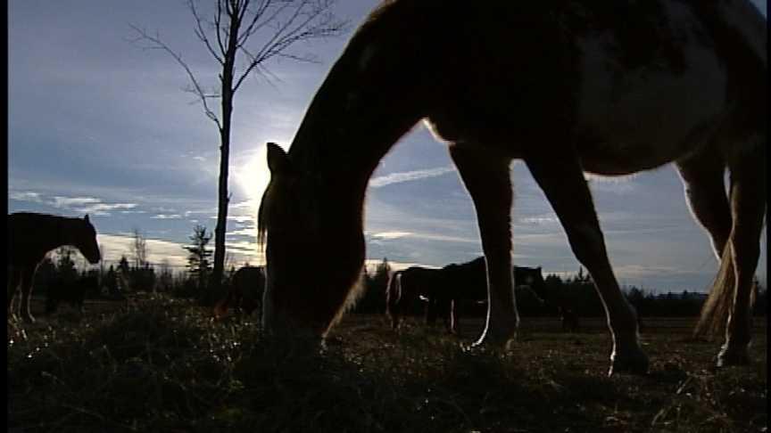 Horse Tenders