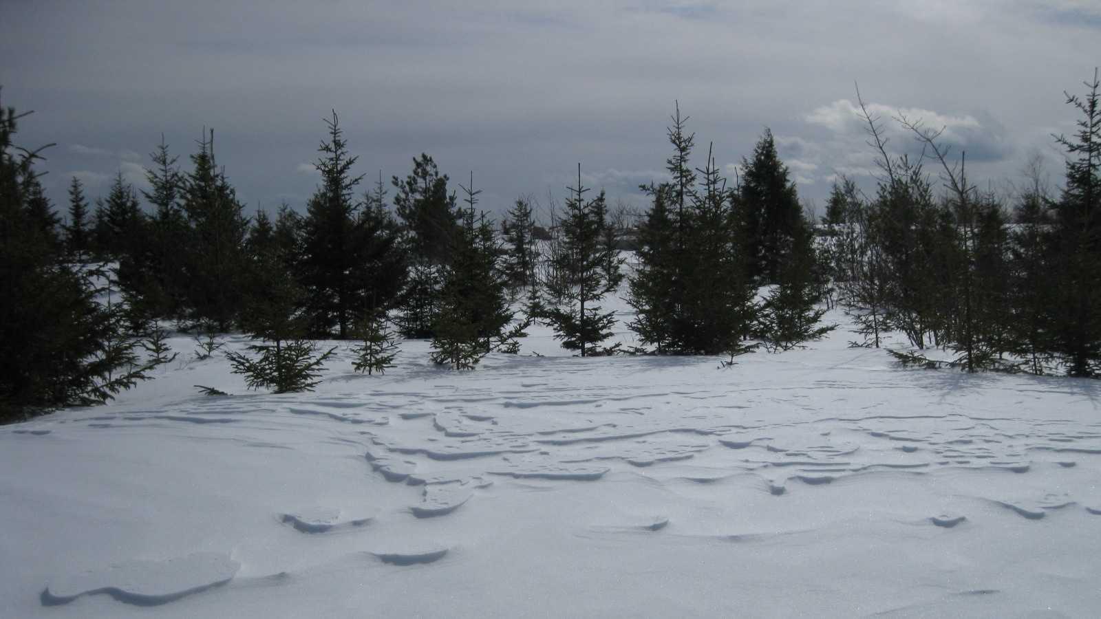 snowshoe-1-6.jpg