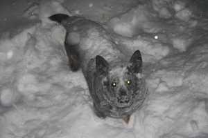 A dog in Allenstown.