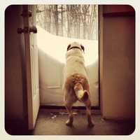A dog in Atkinson.