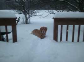 A dog in Northfield