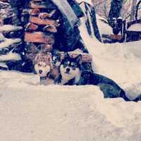 Dogs in Hooksett