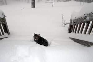 Katy the cat in Pittsfield