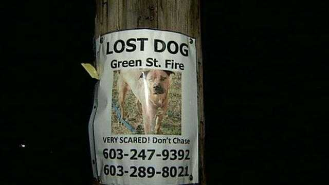 Woman searches for dog after fire destroys apartment