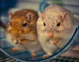 Growing up, Jean had two gerbils named Chip and Dale.