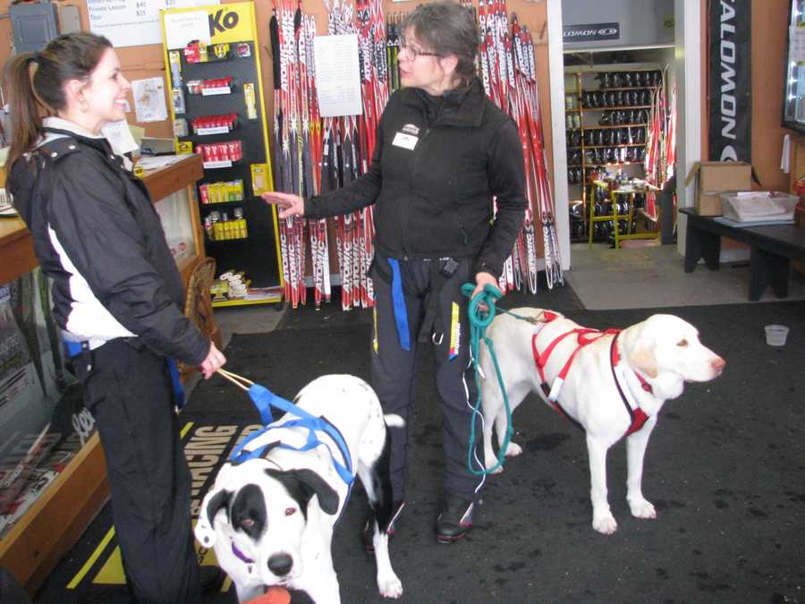 Whether you have a Chihuahua or an English Mastiff, you can teach your dog to skijor at Gunstock.