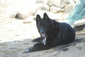 """Growing up Jason had lots of pets. """"We always had cats and dogs when I was growing up, but I'm a dog person. Unfortunately, just last month my dog Mac passed away. He was a big boy! Great dog…he is missed,"""" said Jason."""