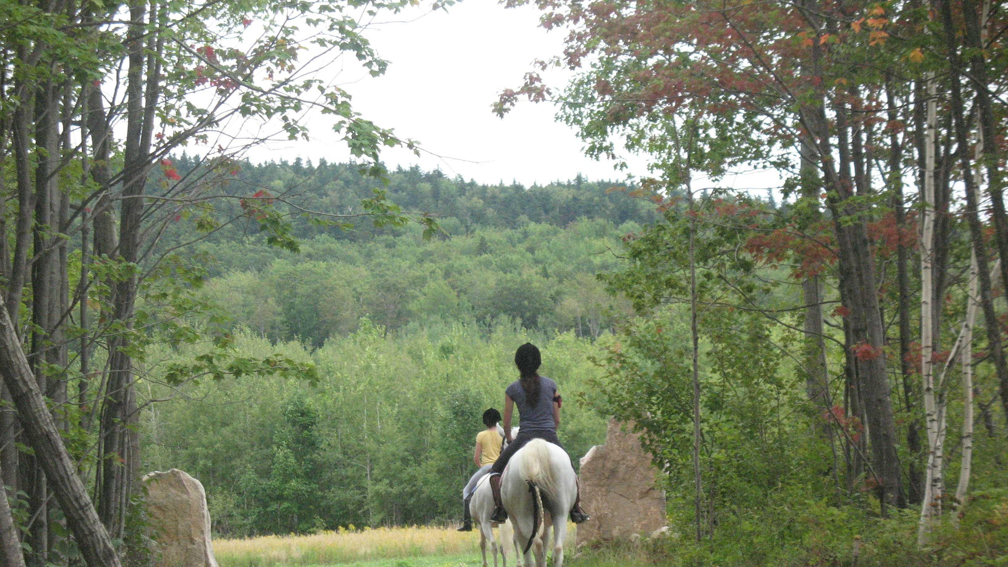 horse-trail-423.jpg