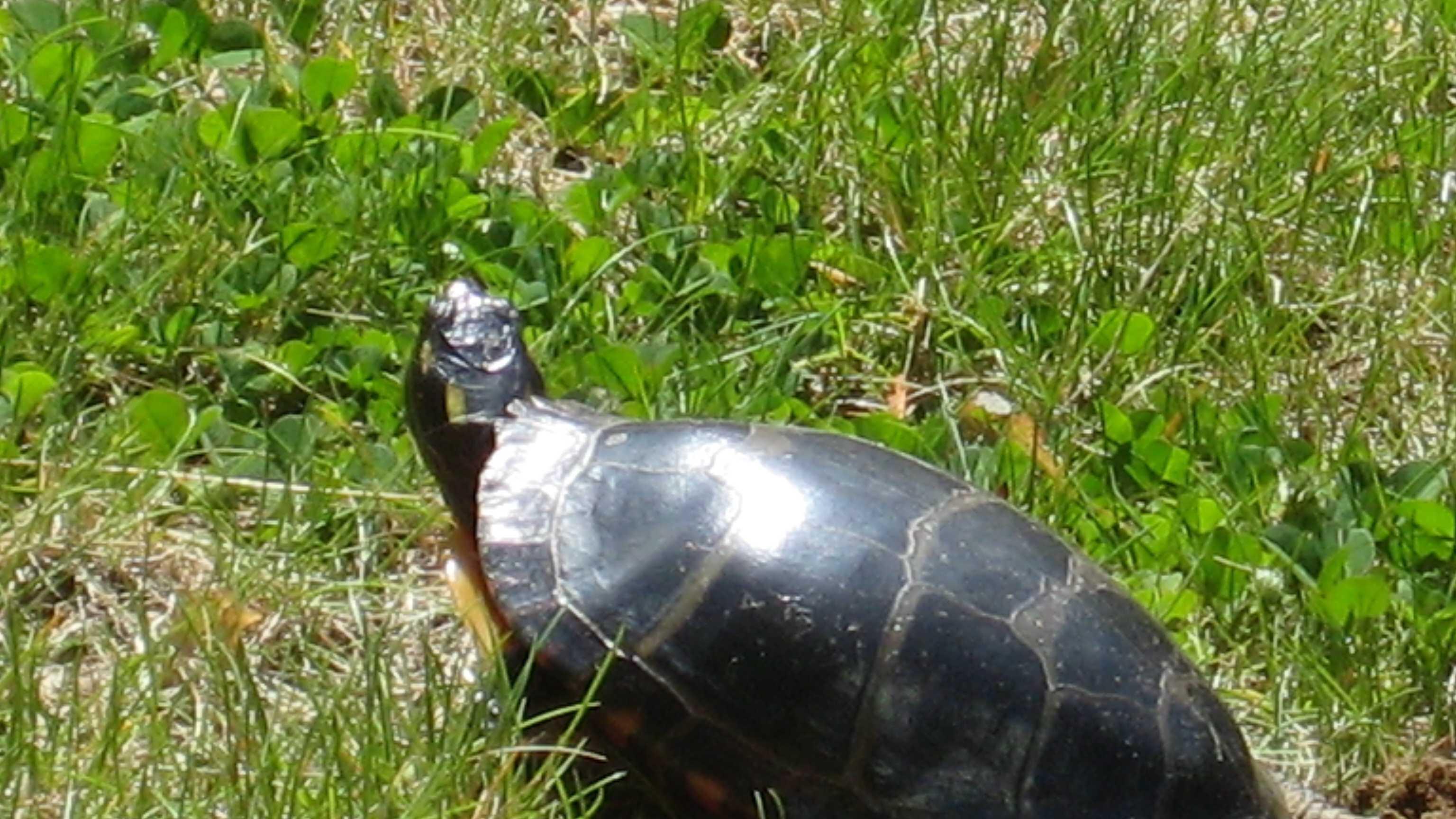 turtle-521.jpg