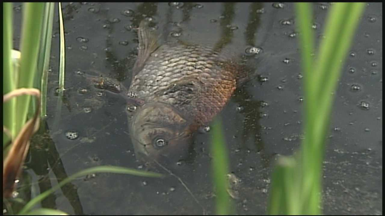 Dozens of dead fish are found floating at a popular park pond in Concord, leaving city officials baffled and concerned.