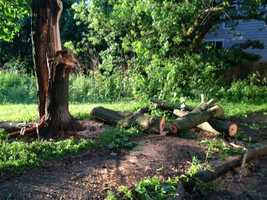 A large tree fell on McDonough Street in Portsmouth.