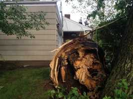 A tree fell on a house on Sheffield Street in Portsmouth.