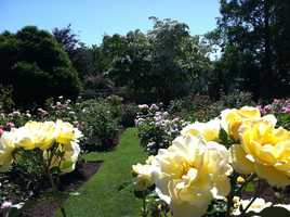 Take a look at these beautiful photos of the roses at Fuller Gardens in North Hampton. This week, the NH Chronicle crew will be there.