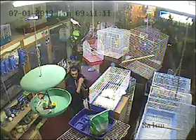 Police are investigating the theft of a kitten from a pet store in Chichester.