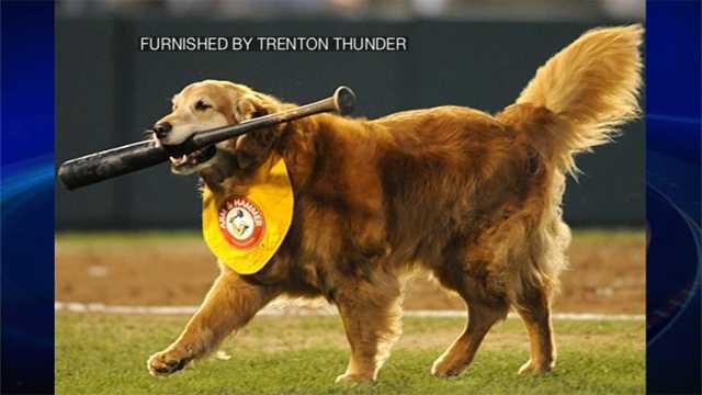 Chase the dog