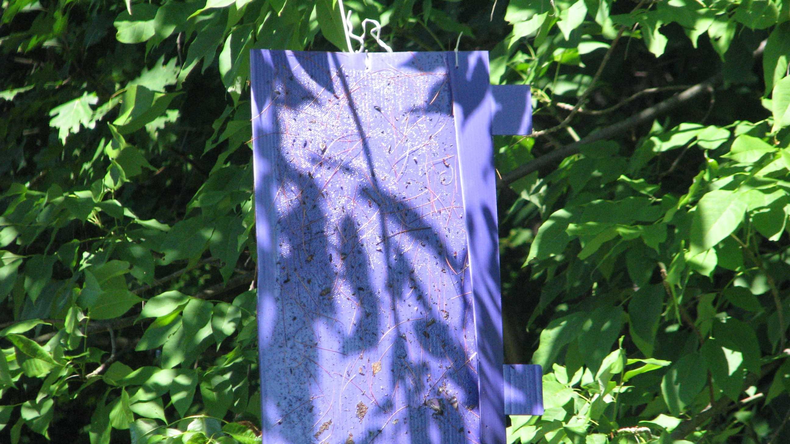 bug traps pic 1