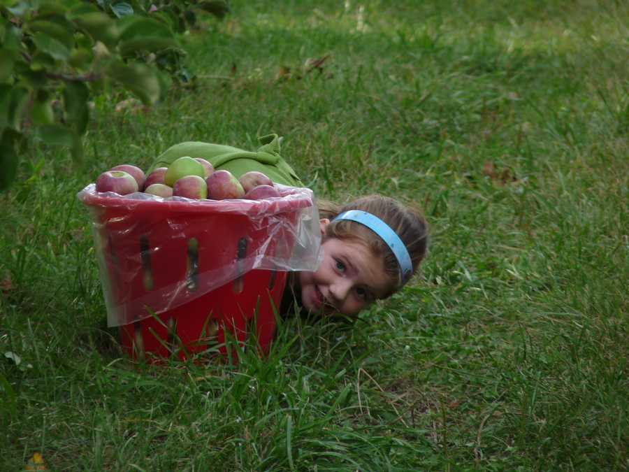 We combed through nearly 1,000 nominations! Now, here's a look at the top apple orchards in the Granite State, according to our viewers...