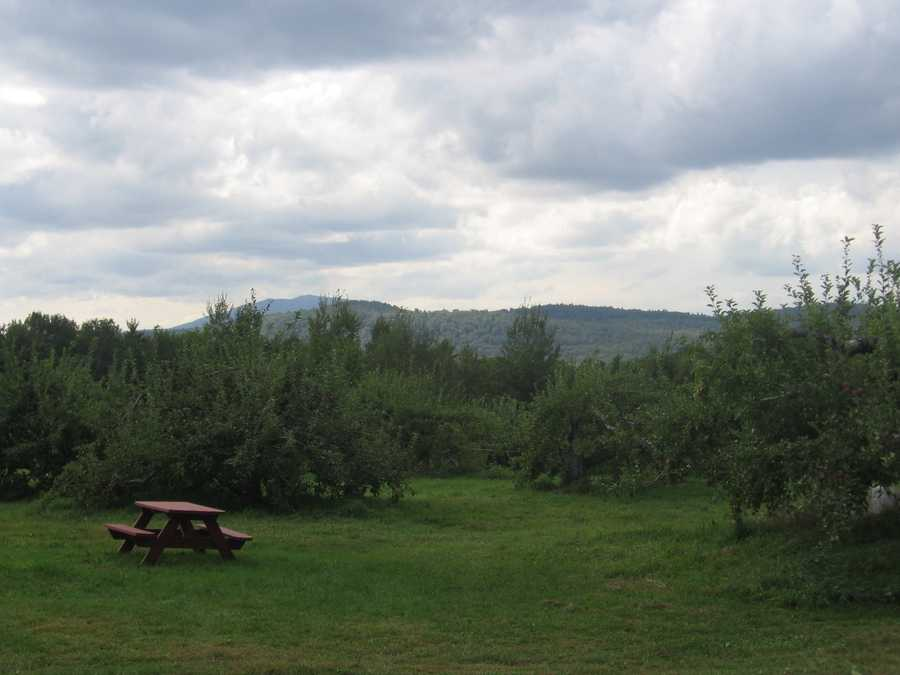 Tie-17) Norway Hill Orchard in Hancock