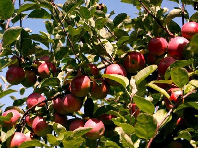 Tie-17) King Blossom Farm in Grantham