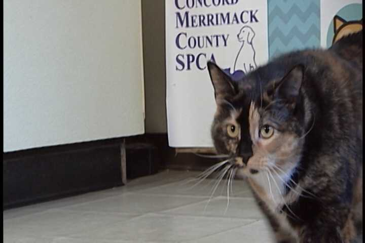 Sissy is a 4-yr. old spayed female. She loves attention.