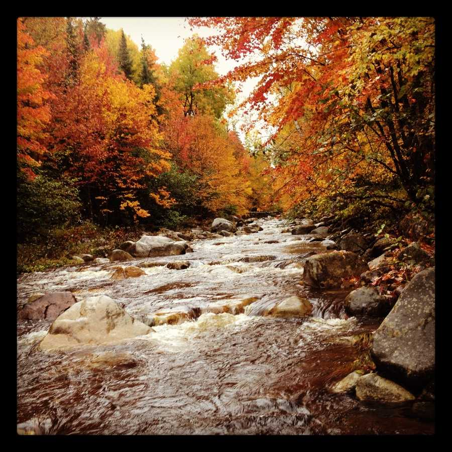 We sorted through dozens of votes to come up with the best places to see fall foliage in New Hampshire.