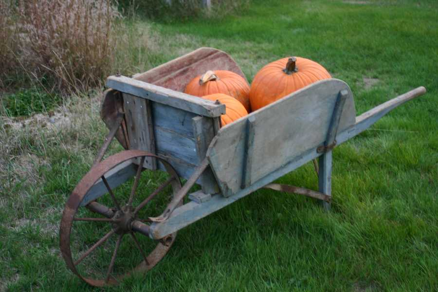 We sorted through your votes to determine your favorite pumpkin patches in the Granite State!