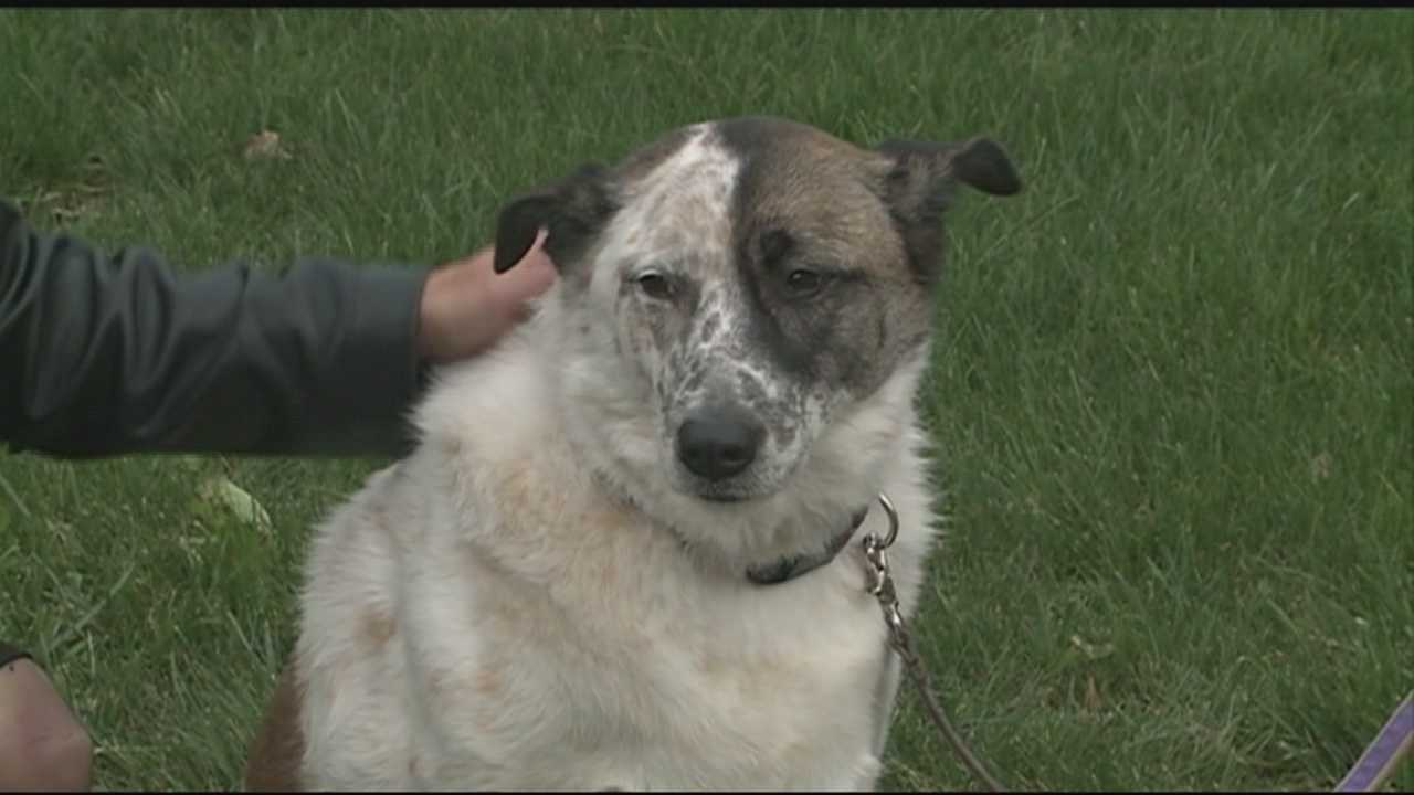 Dog saved by fallen soldier rescued from fire