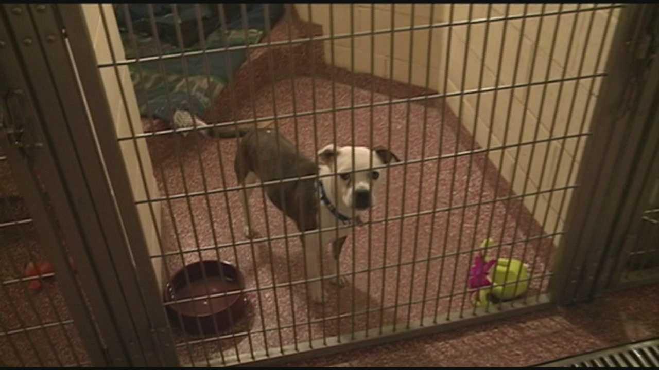 NH SPCA Adopt a Thon