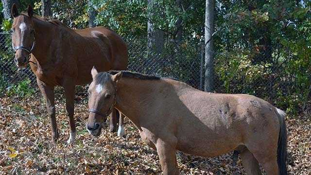 4 horses rescued from Derry owners