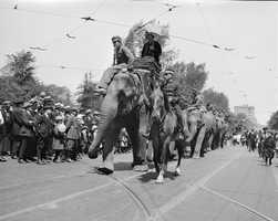 Circus elephants parade through Boston in 1918
