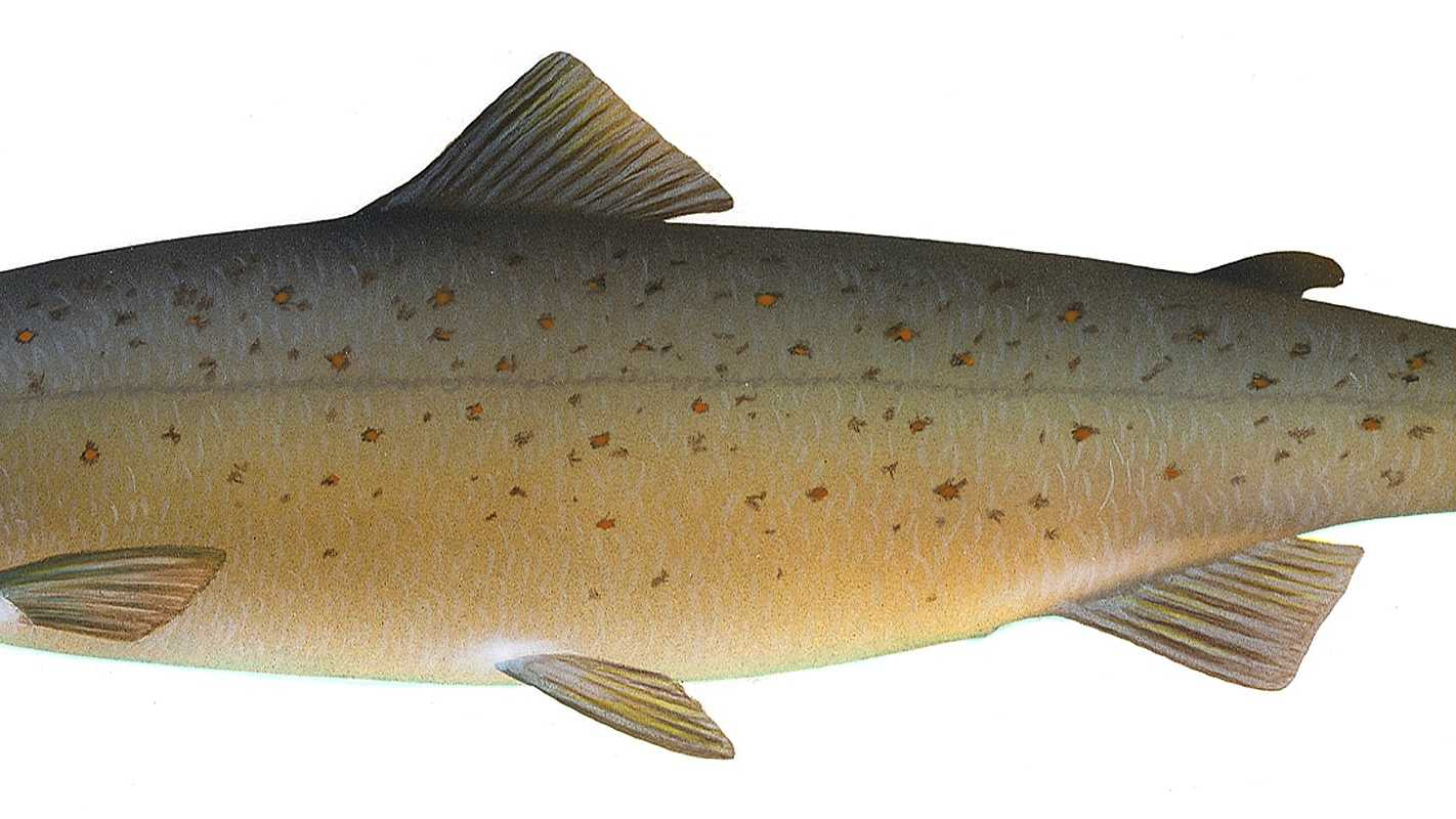 salmon-11-4.jpg