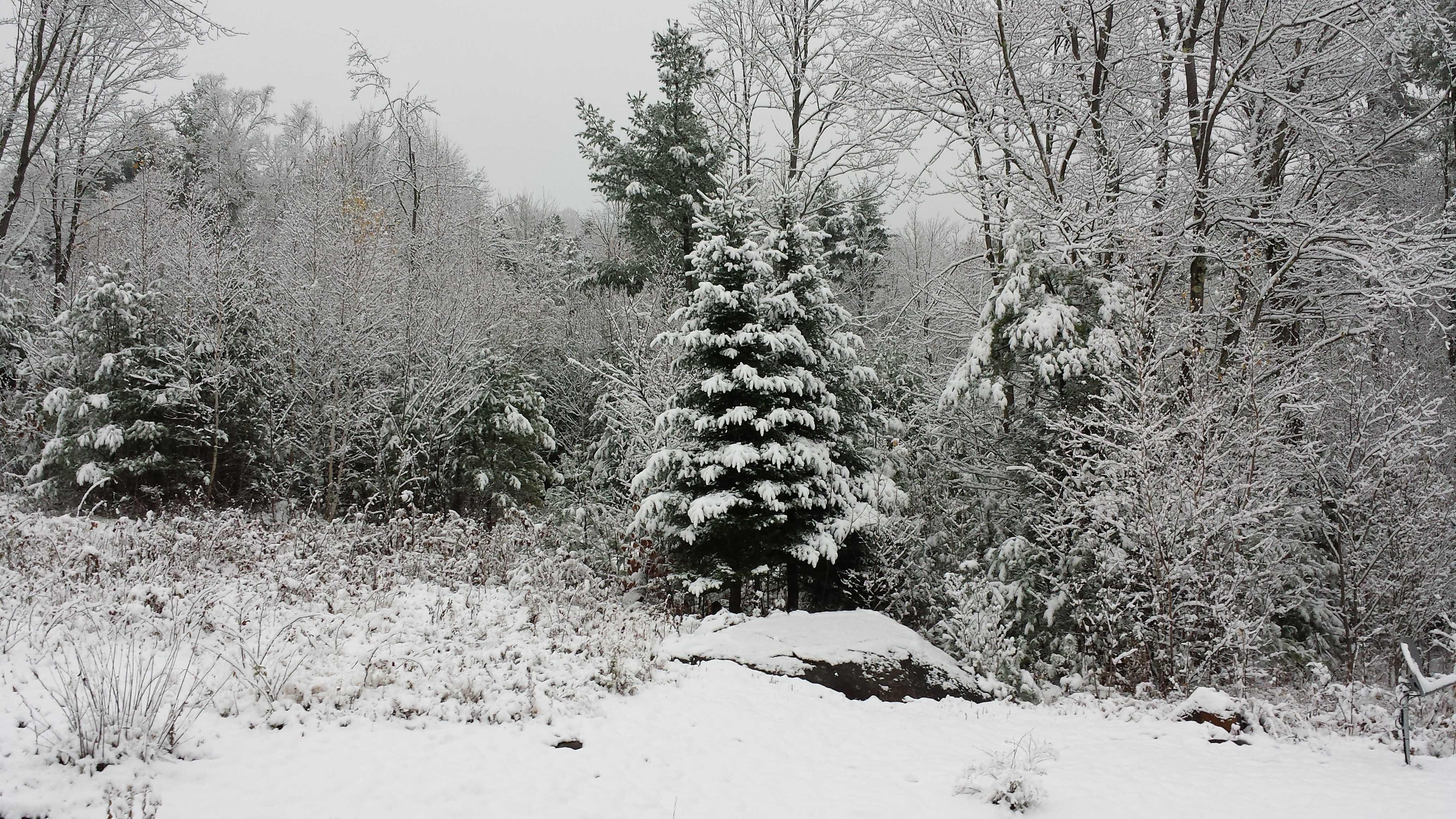 Snow in Campton