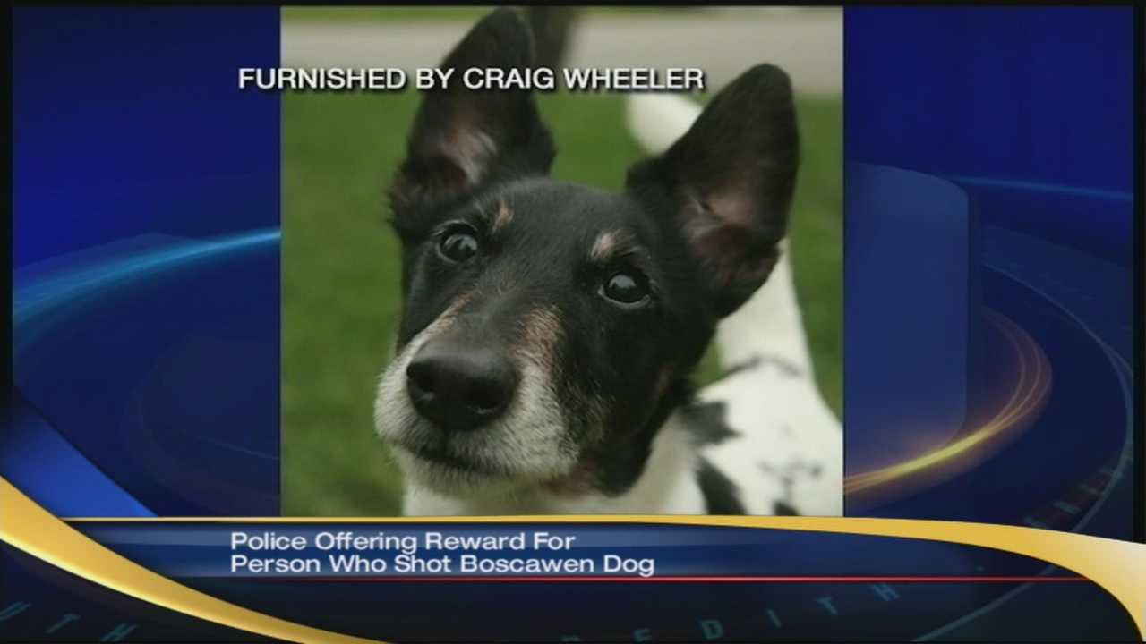 Police are looking for the person responsible for the shooting death of this dog